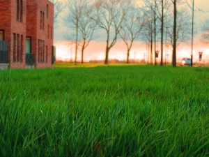lawns-293541_640