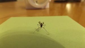 mosquito-606930_640